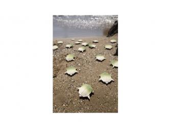 Želva H2Origami 5